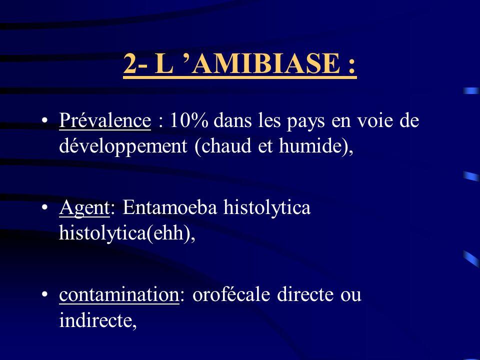 2- L 'AMIBIASE : Prévalence : 10% dans les pays en voie de développement (chaud et humide), Agent: Entamoeba histolytica histolytica(ehh),