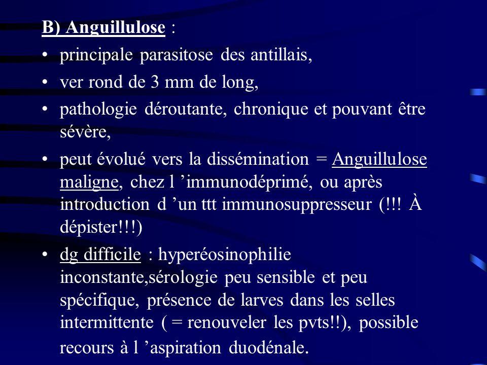 B) Anguillulose : principale parasitose des antillais, ver rond de 3 mm de long, pathologie déroutante, chronique et pouvant être sévère,