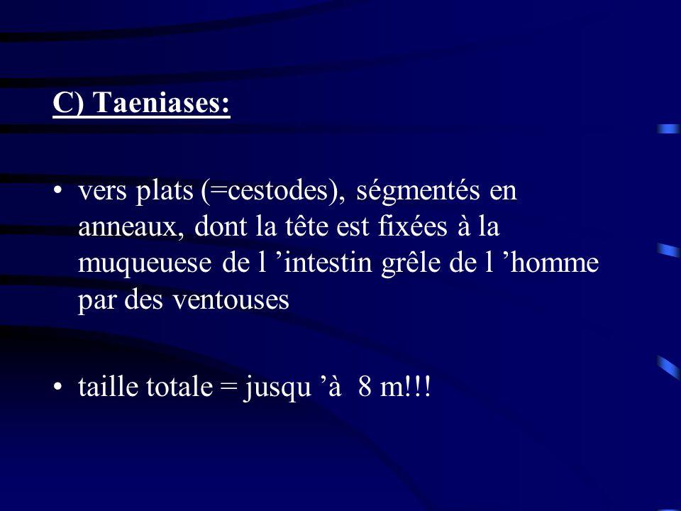 C) Taeniases: vers plats (=cestodes), ségmentés en anneaux, dont la tête est fixées à la muqueuese de l 'intestin grêle de l 'homme par des ventouses.