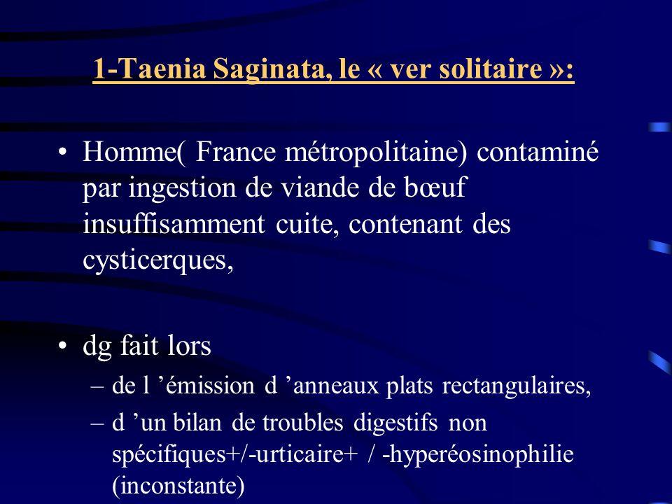 1-Taenia Saginata, le « ver solitaire »: