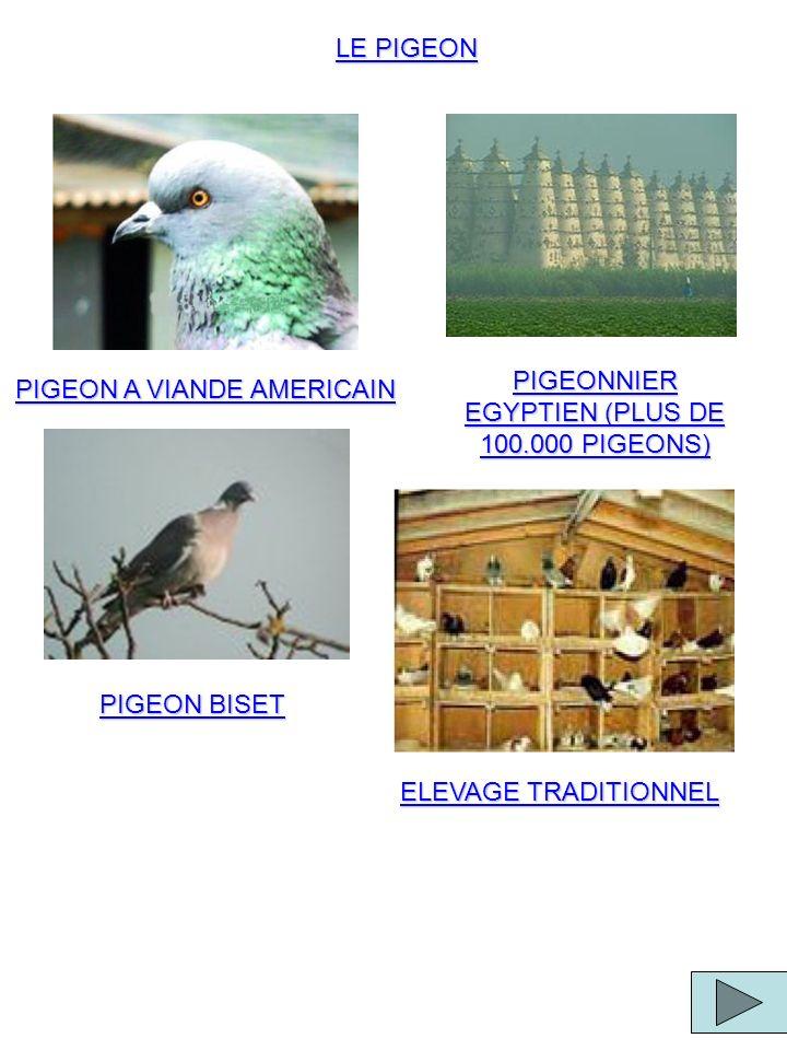PIGEONNIER EGYPTIEN (PLUS DE 100.000 PIGEONS)