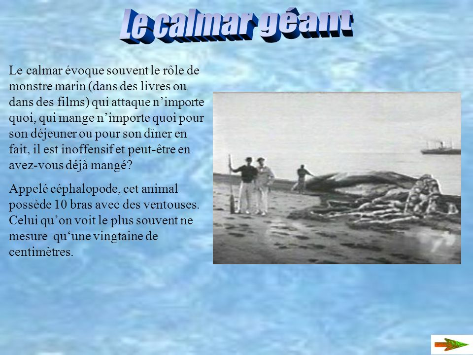 Le calmar géant