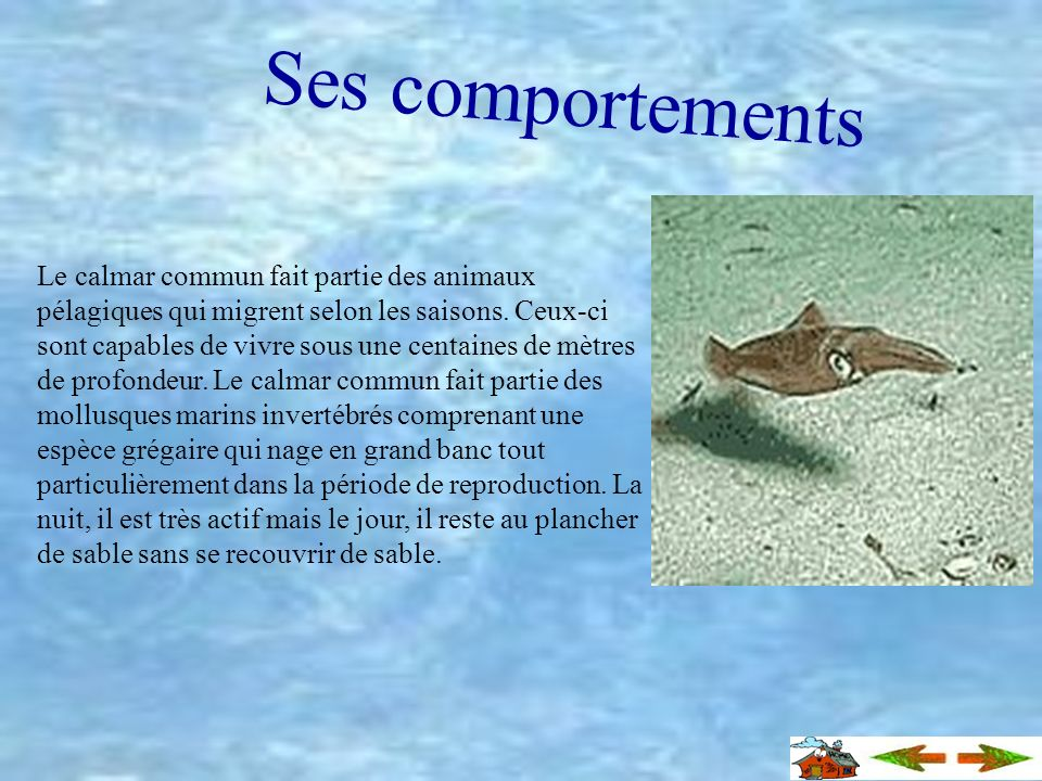 Ses comportements