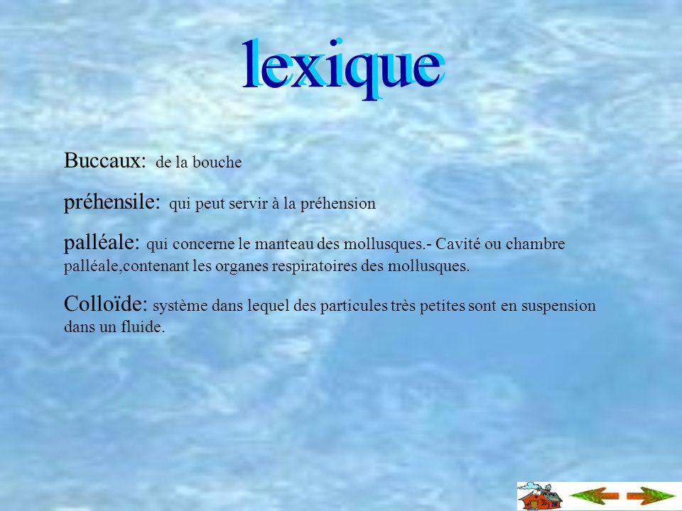 lexique Buccaux: de la bouche