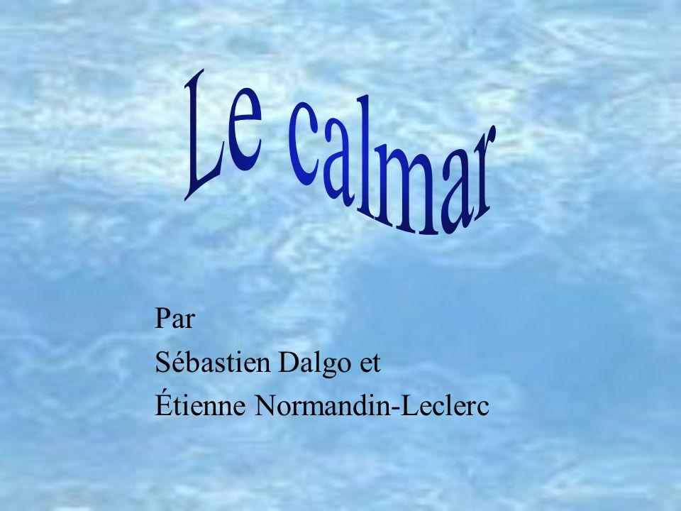 Le calmar Par Sébastien Dalgo et Étienne Normandin-Leclerc