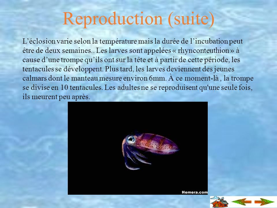 Reproduction (suite)