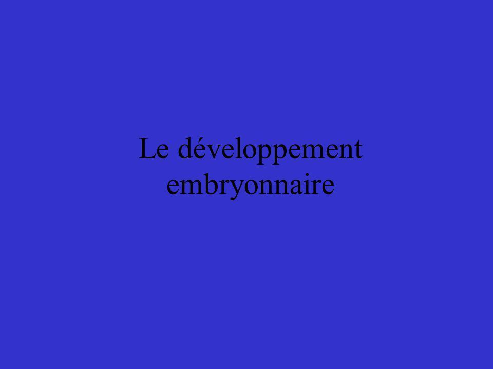Le développement embryonnaire