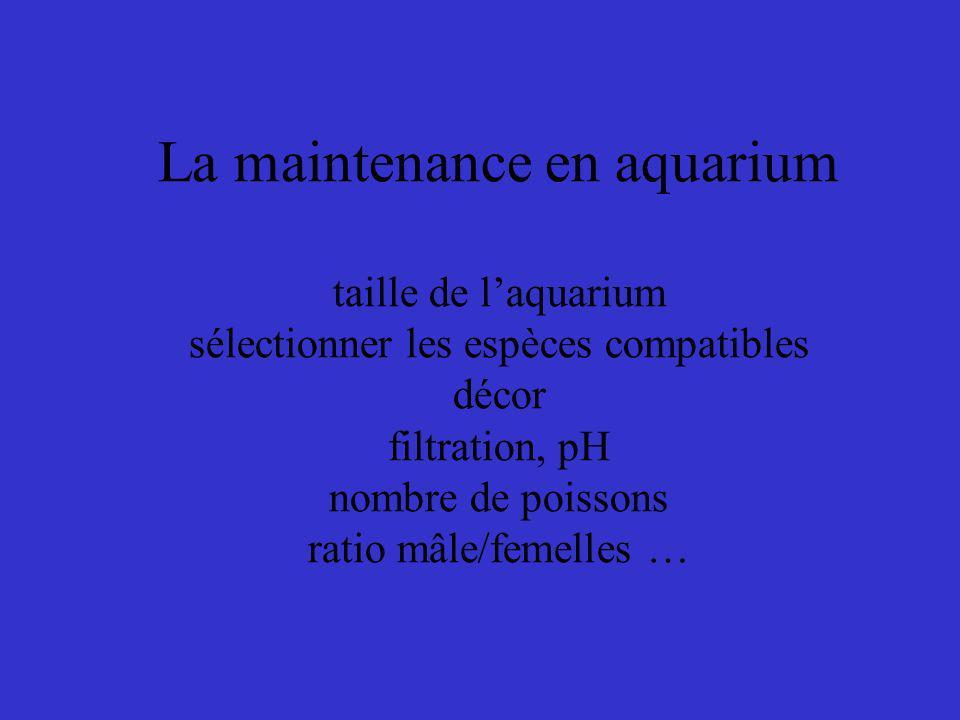 La maintenance en aquarium taille de l'aquarium sélectionner les espèces compatibles décor filtration, pH nombre de poissons ratio mâle/femelles …