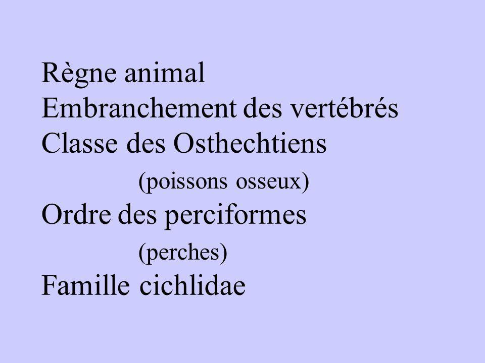 Règne animal Embranchement des vertébrés Classe des Osthechtiens