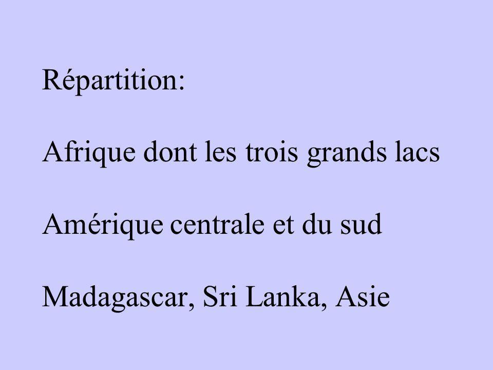 Répartition: Afrique dont les trois grands lacs Amérique centrale et du sud Madagascar, Sri Lanka, Asie