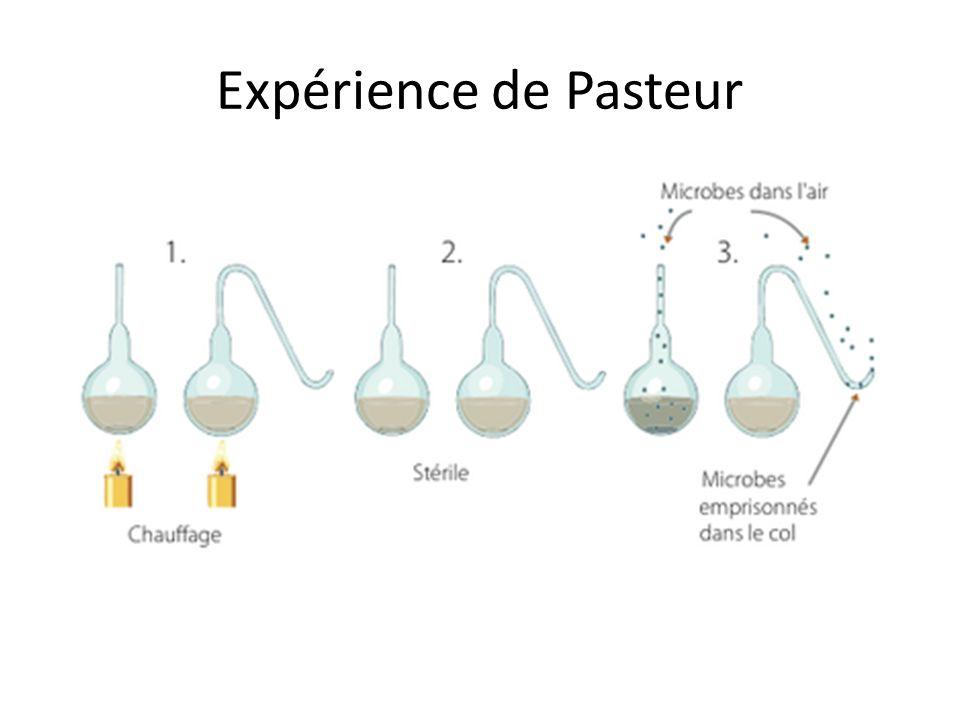 Expérience de Pasteur