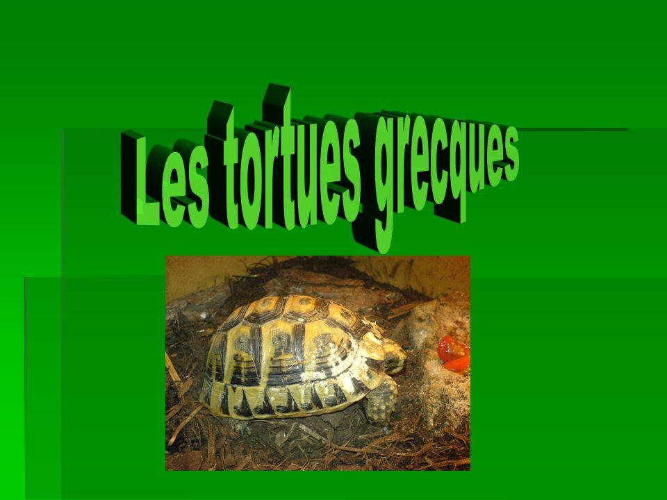 Les tortues grecques
