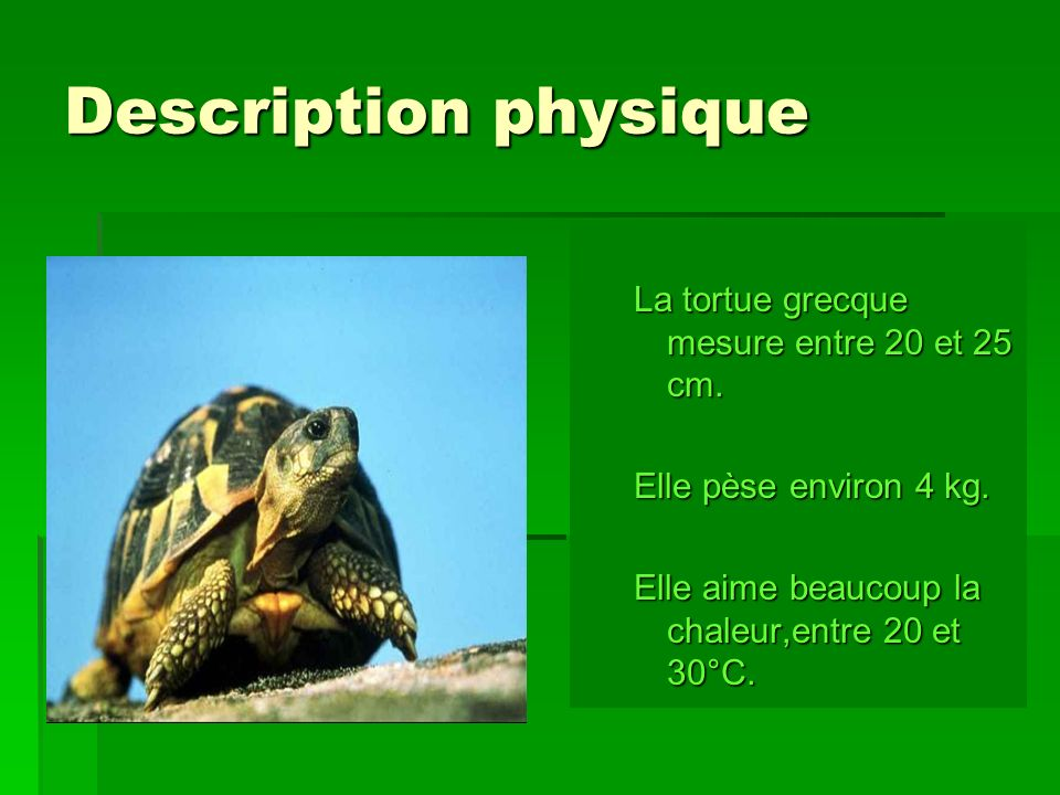 Description physique La tortue grecque mesure entre 20 et 25 cm.