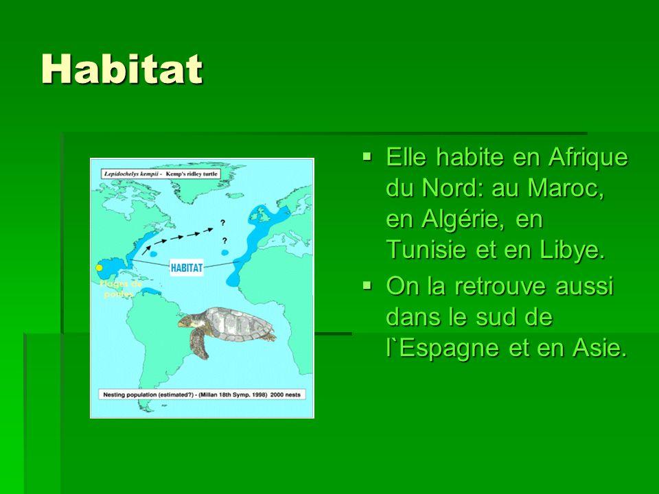 Habitat Elle habite en Afrique du Nord: au Maroc, en Algérie, en Tunisie et en Libye.