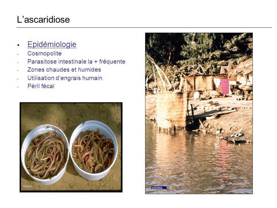L'ascaridiose Epidémiologie Cosmopolite