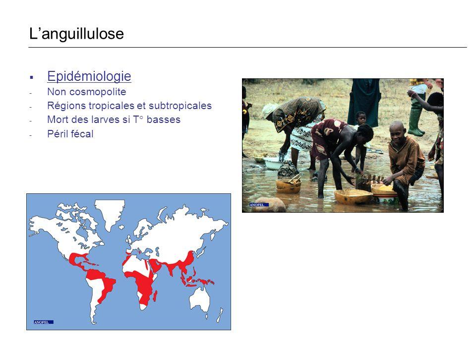 L'anguillulose Epidémiologie Non cosmopolite