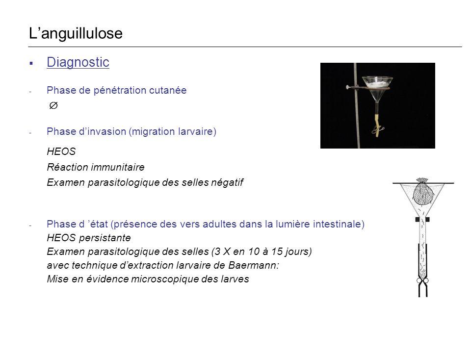 L'anguillulose HEOS Diagnostic Phase de pénétration cutanée Æ