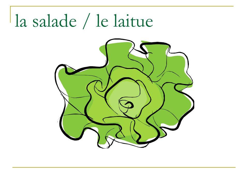 la salade / le laitue