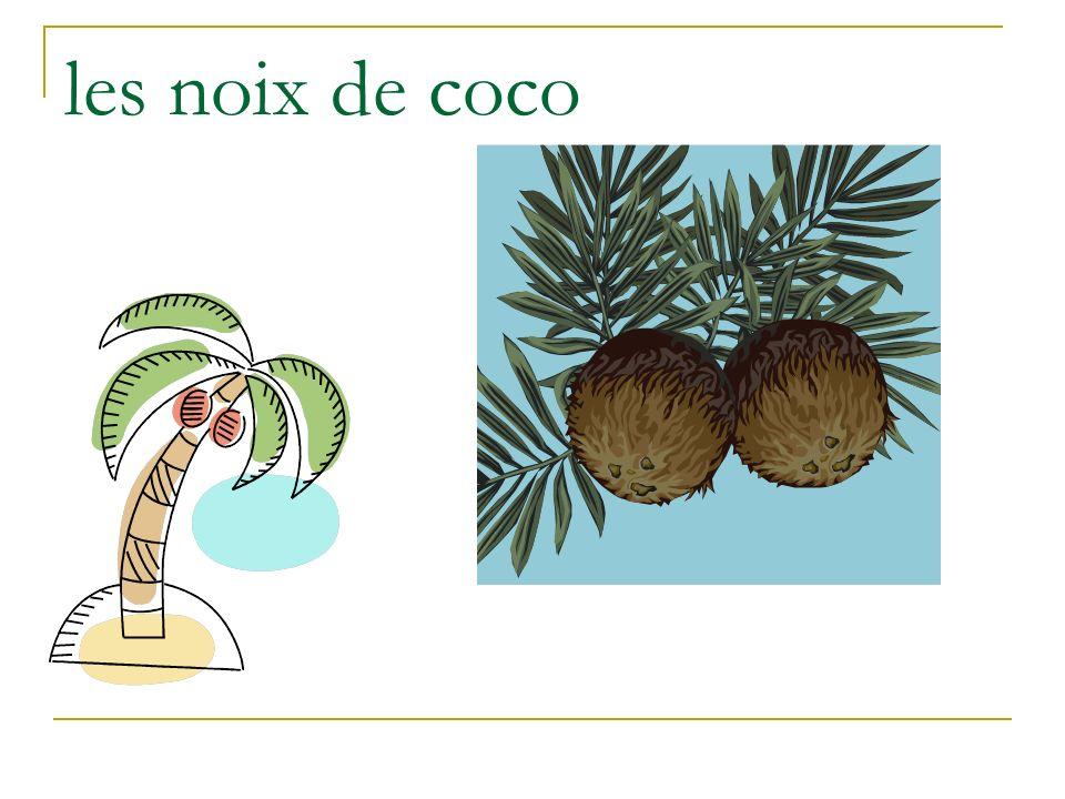 les noix de coco