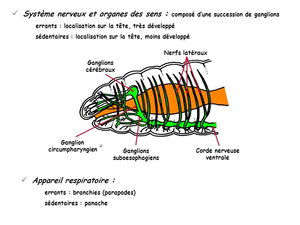 Appareil respiratoire :