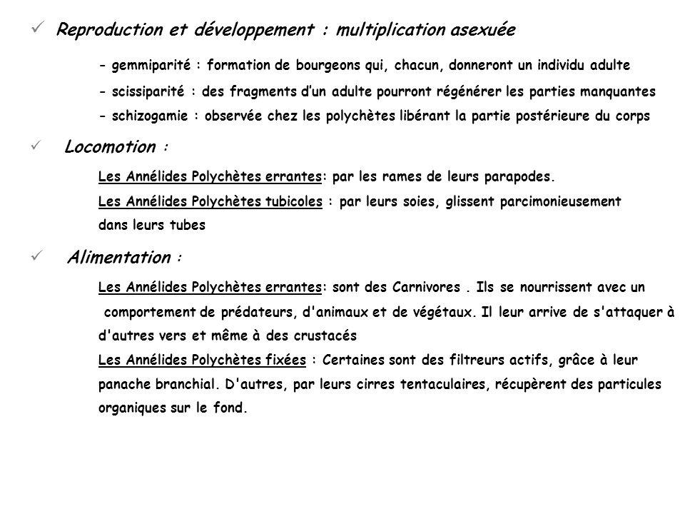 Reproduction et développement : multiplication asexuée