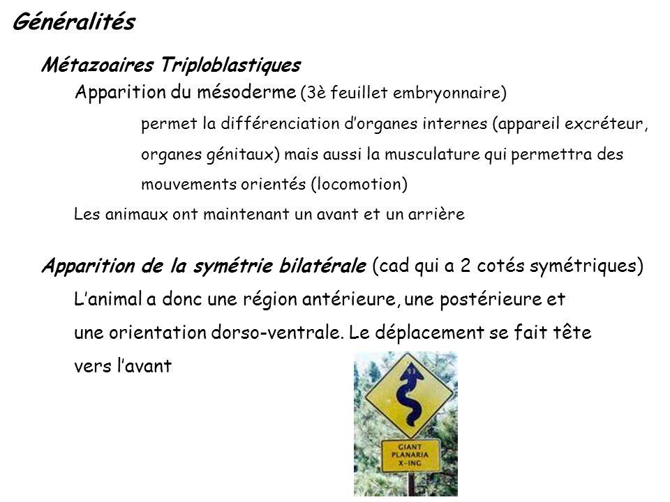 Généralités Métazoaires Triploblastiques