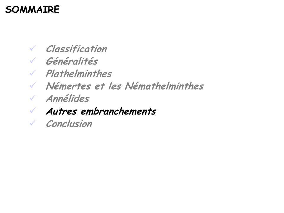 SOMMAIRE Classification. Généralités. Plathelminthes. Némertes et les Némathelminthes. Annélides.