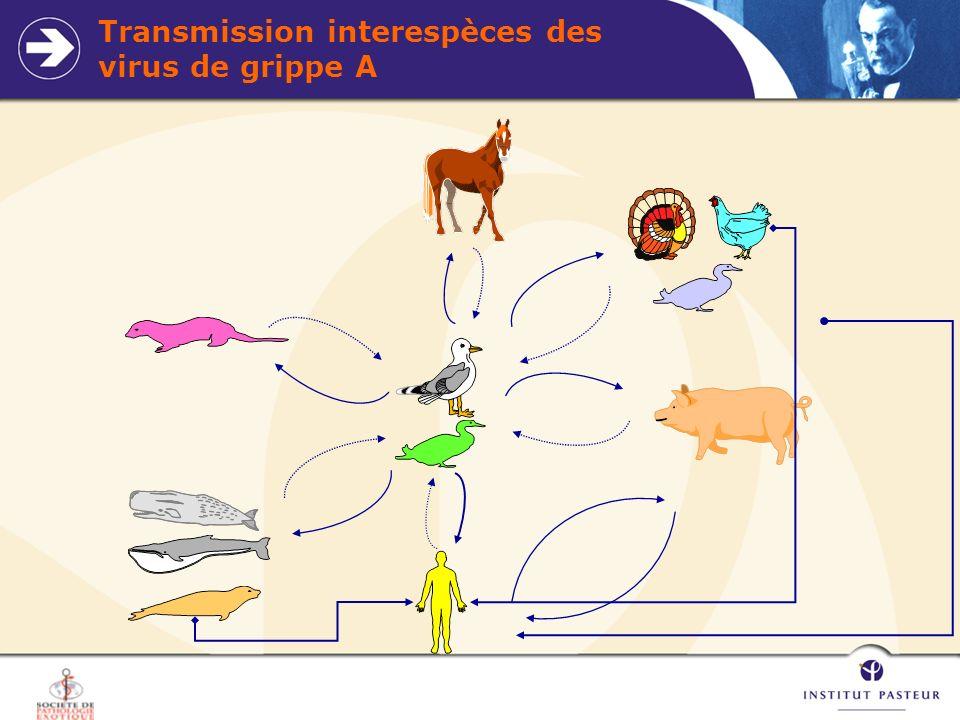 Transmission interespèces des virus de grippe A