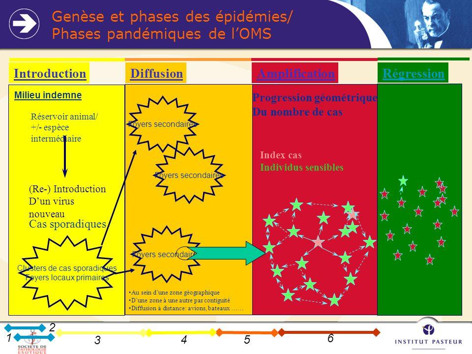 Genèse et phases des épidémies/ Phases pandémiques de l'OMS