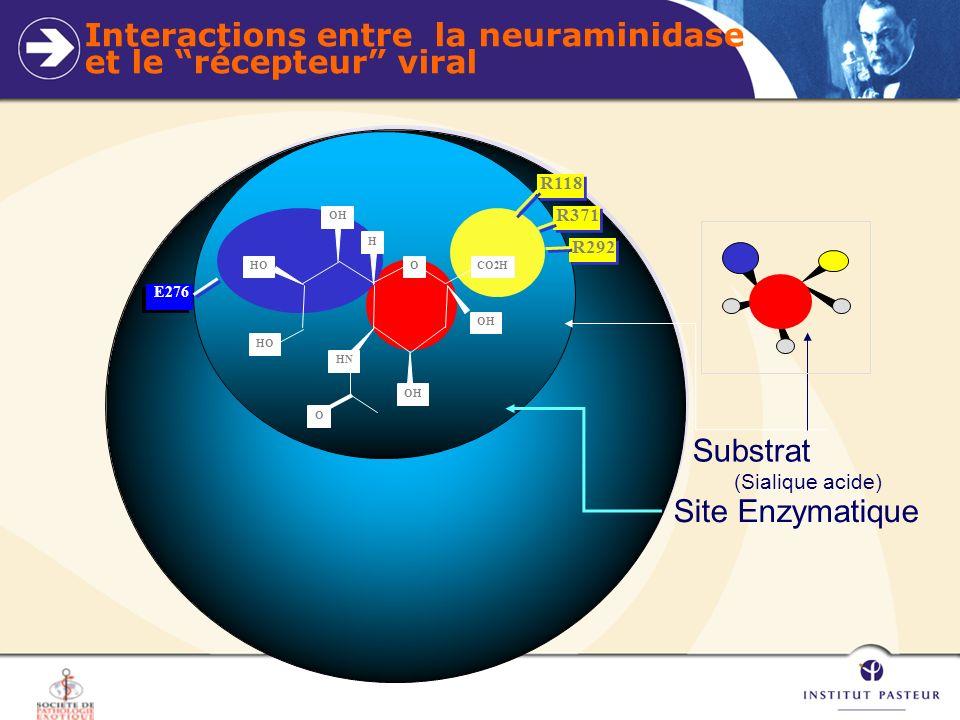 Interactions entre la neuraminidase et le récepteur viral