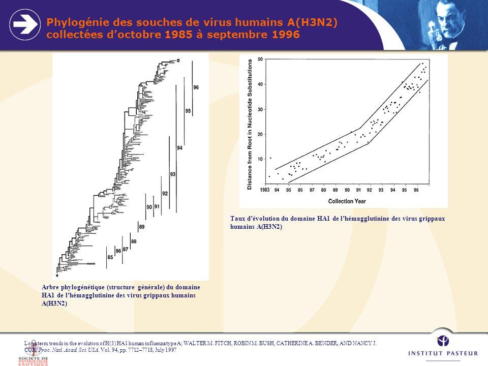 Phylogénie des souches de virus humains A(H3N2) collectées d'octobre 1985 à septembre 1996