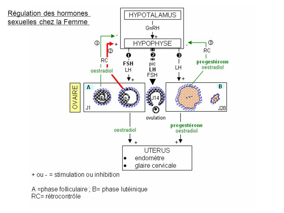 Régulation des hormones