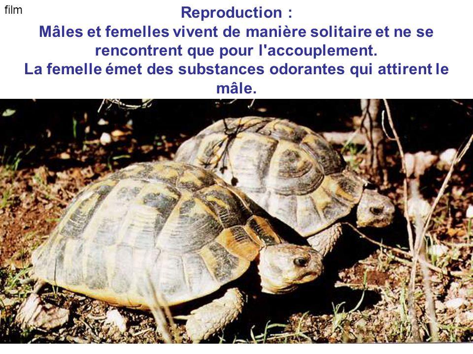 La femelle émet des substances odorantes qui attirent le mâle.