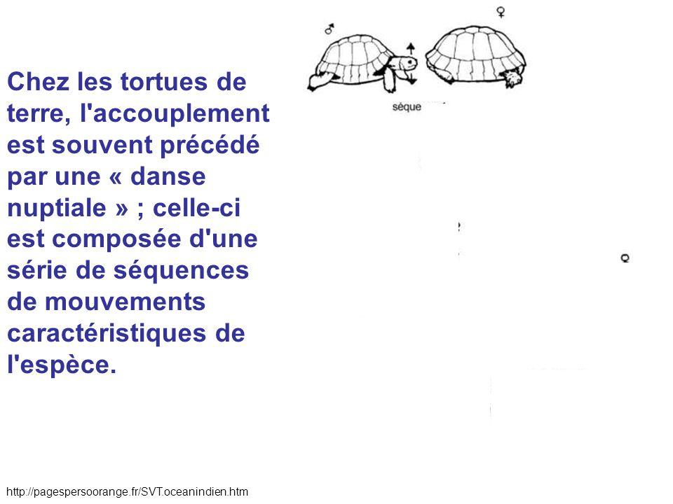 Chez les tortues de terre, l accouplement est souvent précédé par une « danse nuptiale » ; celle-ci est composée d une série de séquences de mouvements caractéristiques de l espèce.