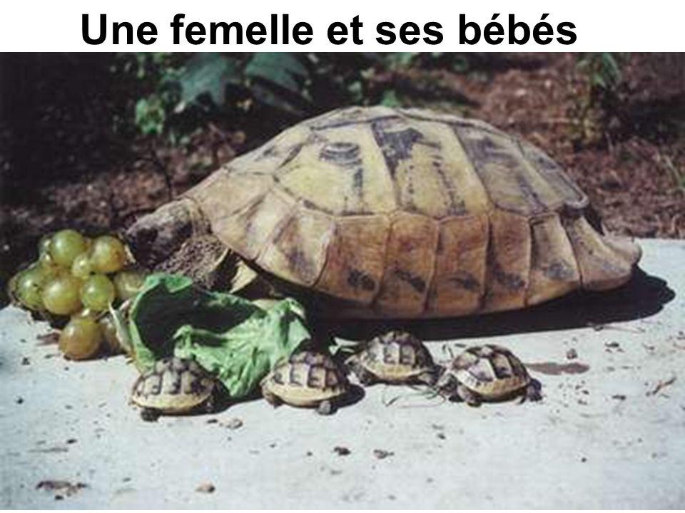 Une femelle et ses bébés