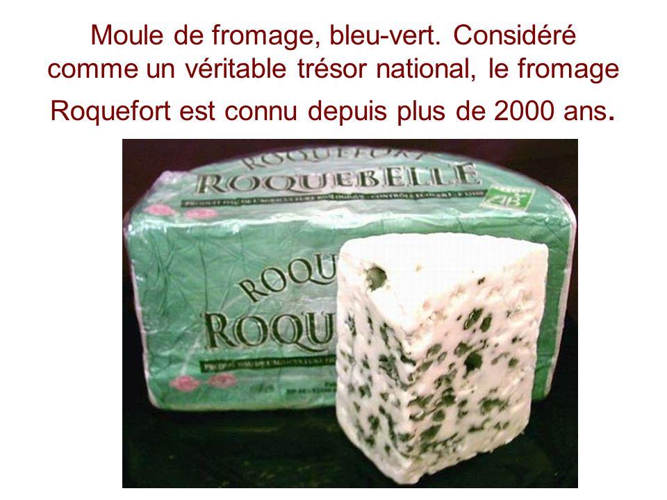 Moule de fromage, bleu-vert