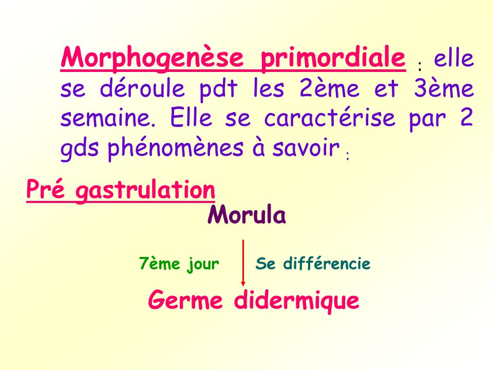 Morphogenèse primordiale : elle se déroule pdt les 2ème et 3ème semaine. Elle se caractérise par 2 gds phénomènes à savoir :