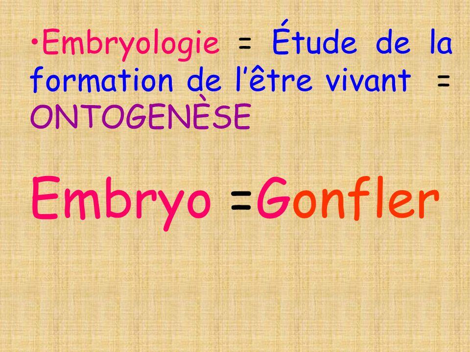Embryologie = Étude de la formation de l'être vivant = ONTOGENÈSE