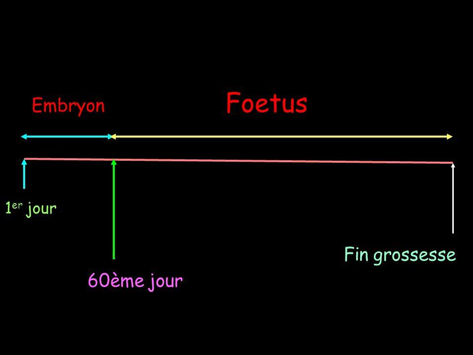 Foetus Embryon 1er jour Fin grossesse 60ème jour