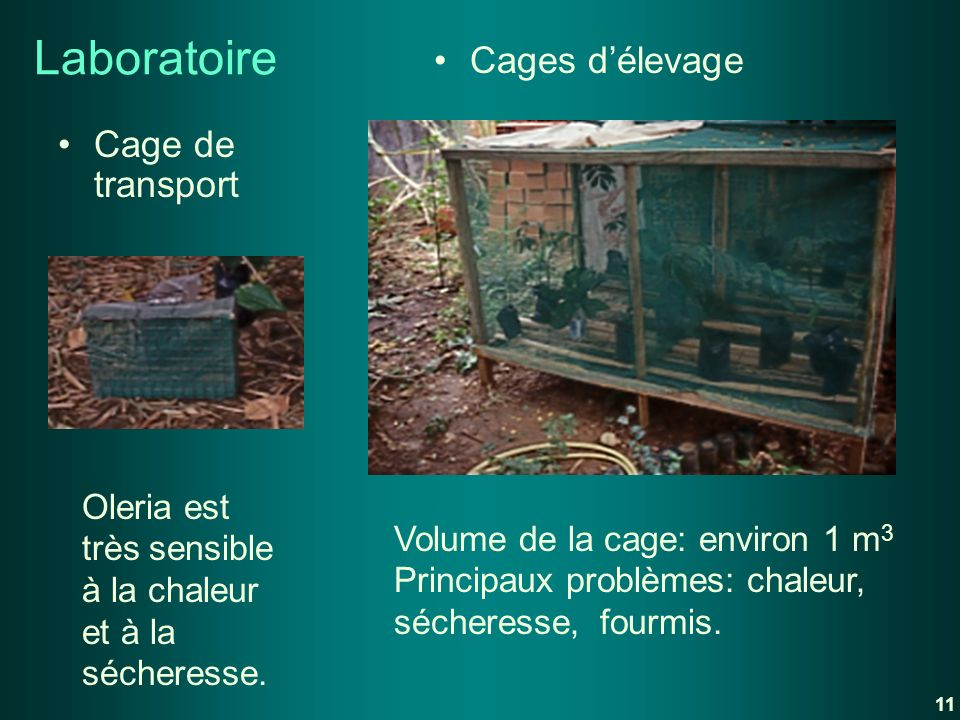 Laboratoire Cages d'élevage Cage de transport