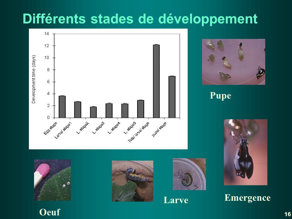 Différents stades de développement
