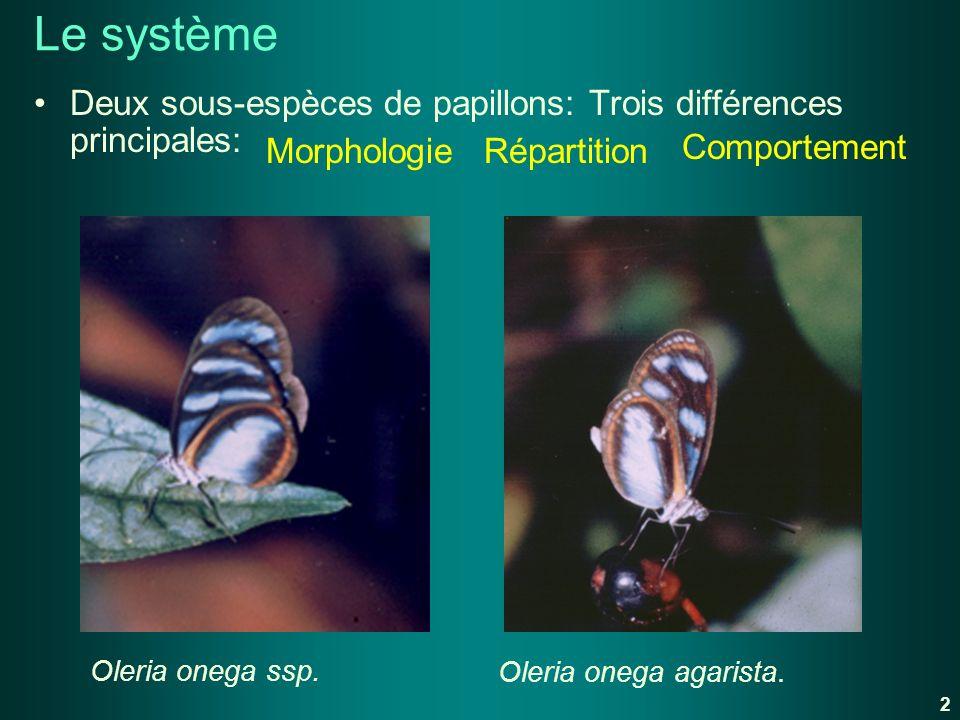 Le système Deux sous-espèces de papillons: Trois différences principales: Comportement. Morphologie.