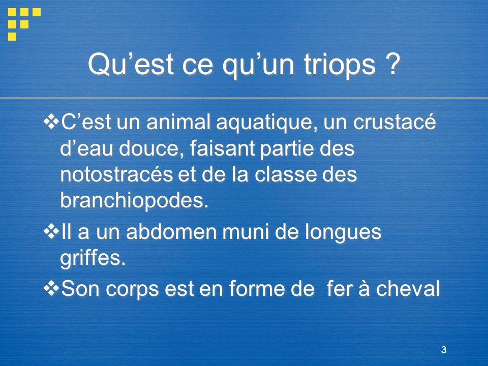 Qu'est ce qu'un triops C'est un animal aquatique, un crustacé d'eau douce, faisant partie des notostracés et de la classe des branchiopodes.