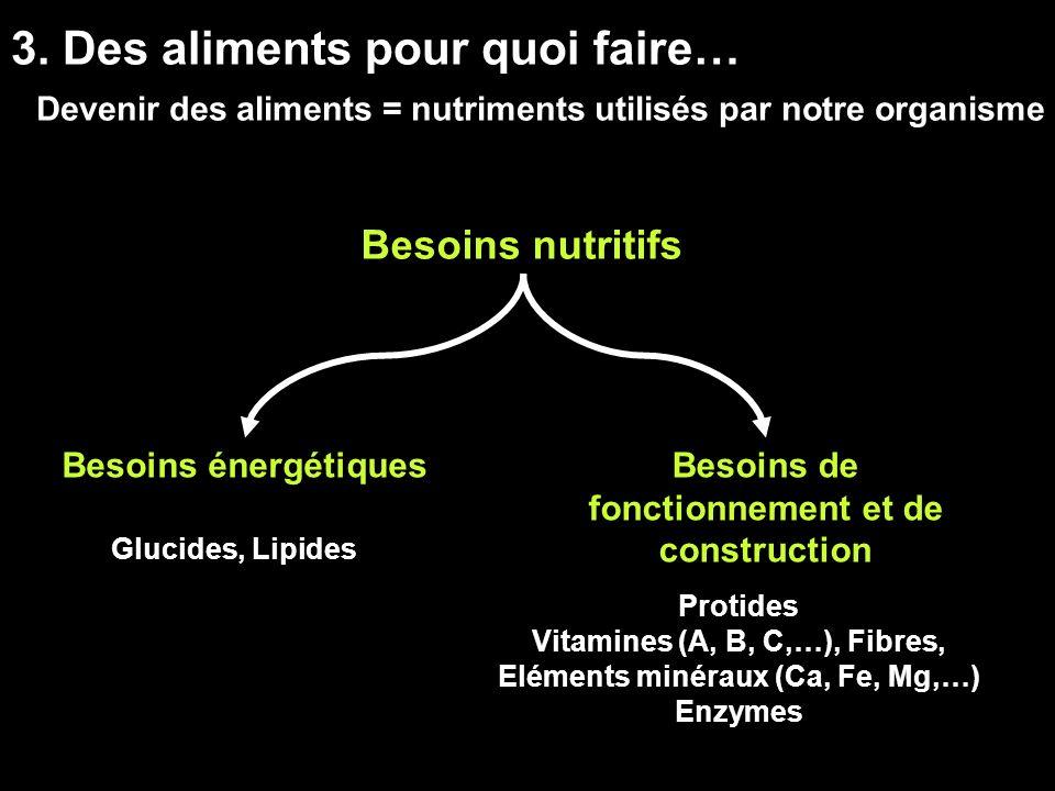 3. Des aliments pour quoi faire…