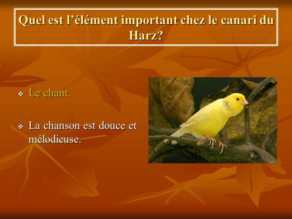 Quel est l'élément important chez le canari du Harz