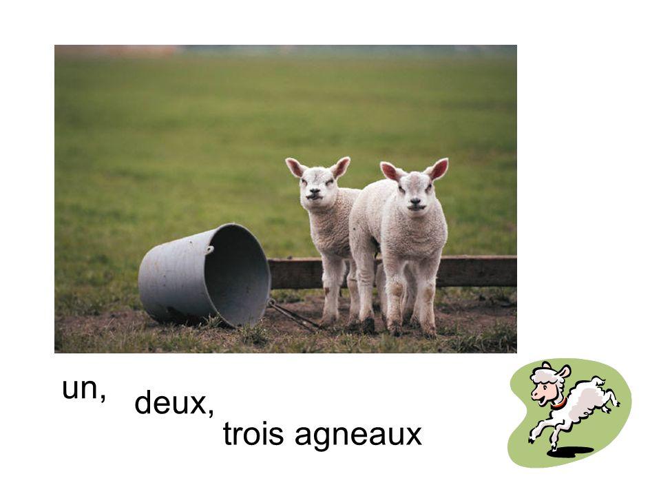 un, deux, trois agneaux