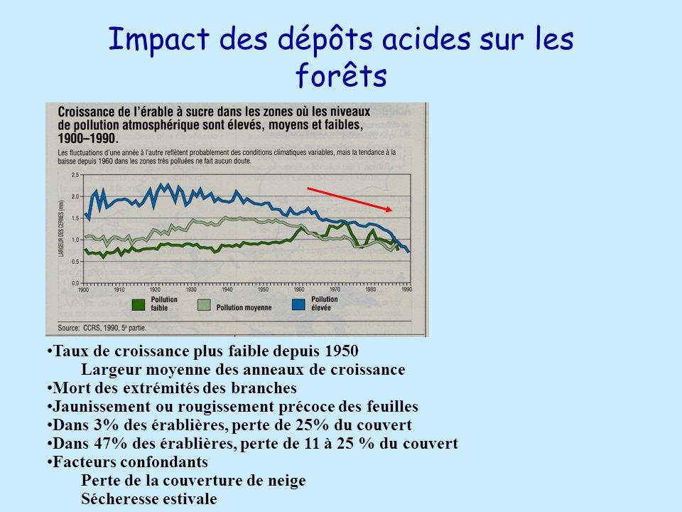 Impact des dépôts acides sur les forêts