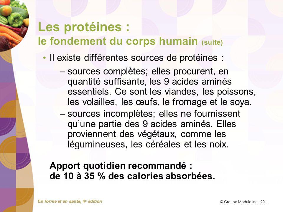 Les protéines : le fondement du corps humain (suite)