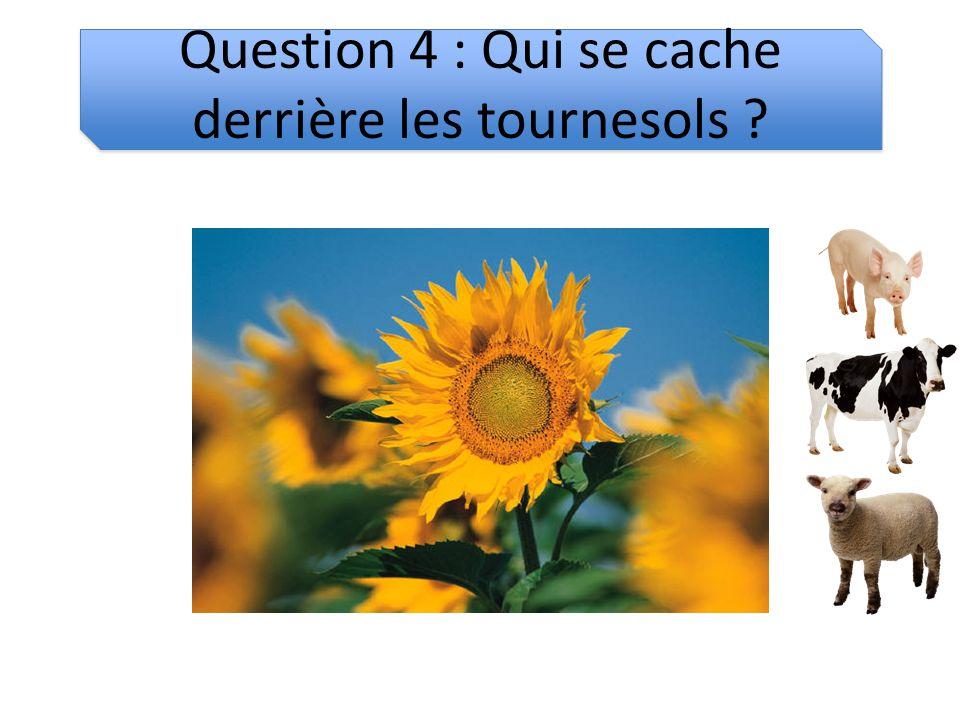 Question 4 : Qui se cache derrière les tournesols