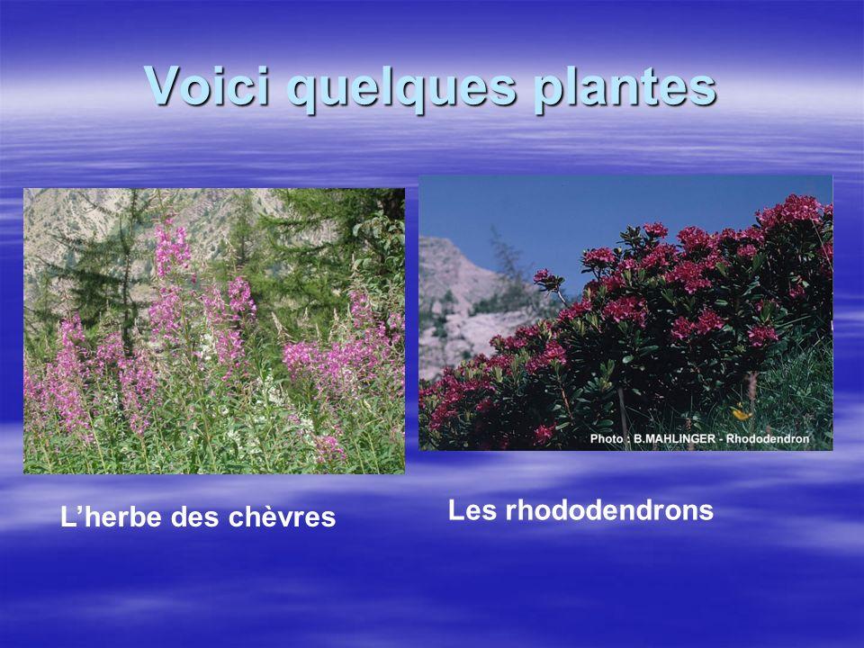 Voici quelques plantes